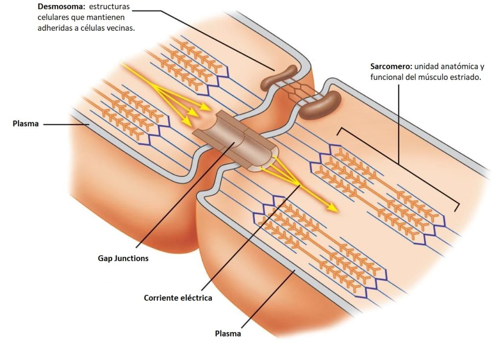 Ciencia y acupuntura